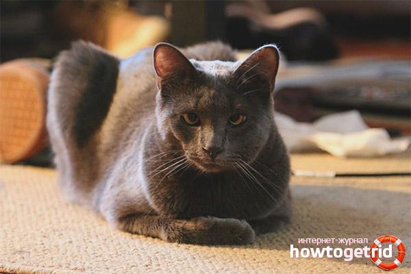 Что делать, если кота укусила оса