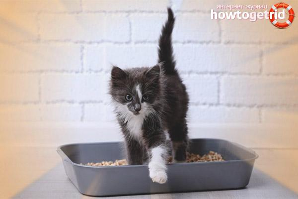 Как часто котенок должен ходить в туалет