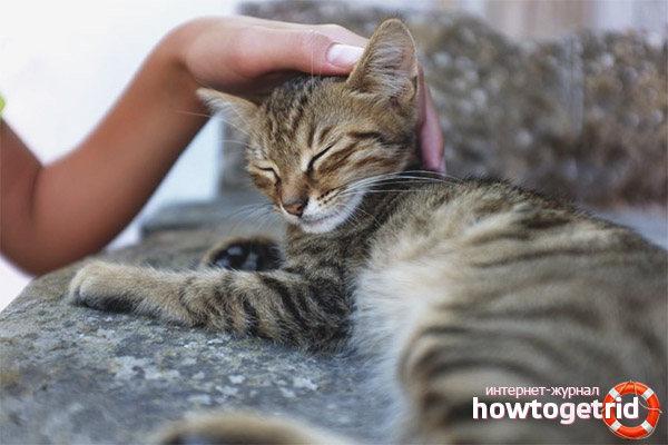 Как обращаться с котом правильно