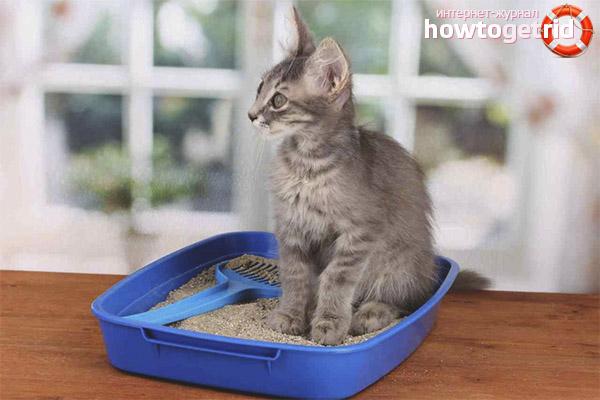 Как понять, что котенок хочет сходить в туалет