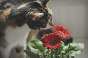 Как защитить цветы от кошки
