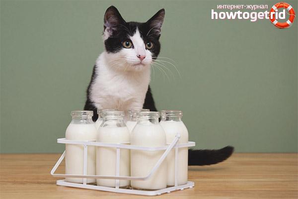 Какие кисломолочные продукты полезны для кошек