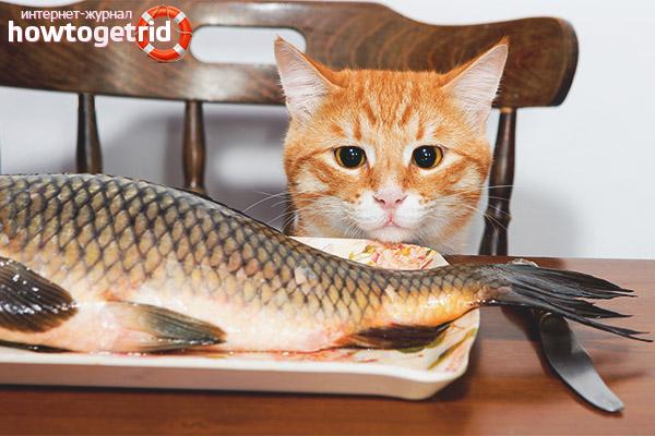 Какую рыбу можно давать кошкам и котам