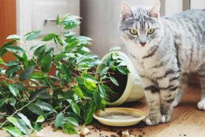Кот или кошка ест землю