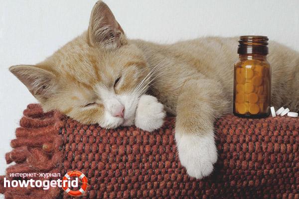 Лечение простуды у кошек