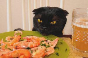 Можно ли кошкам давать креветки
