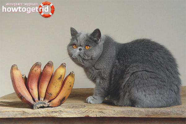 Можно ли кошкам и котам бананы