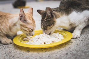 Можно ли кошкам и котам давать рис