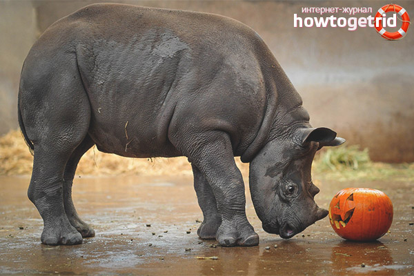 Питание черного носорога