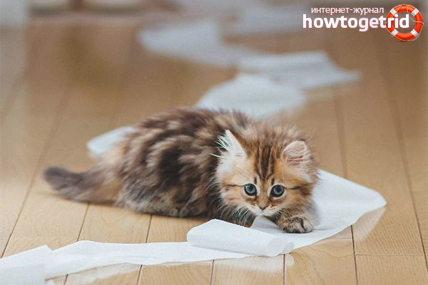 Помощь при запоре у котенка