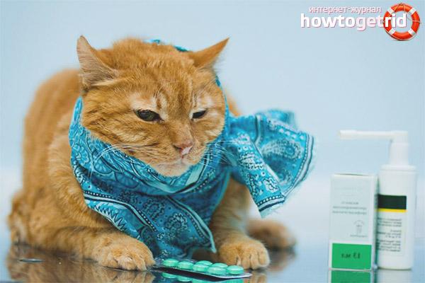 Профилактика простуды у кошек