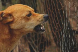 Собака рычит на хозяина