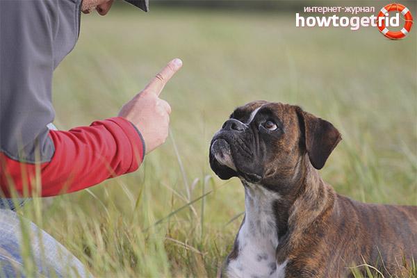 Способы борьбы с доминантным поведением собаки