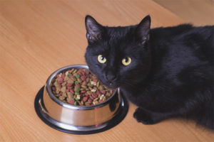 У кошки пропал аппетит