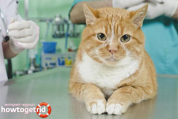 Визит в клинику при укусе кошки пчелой