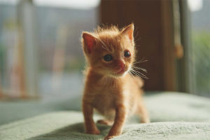 Что нужно для котенка в квартире