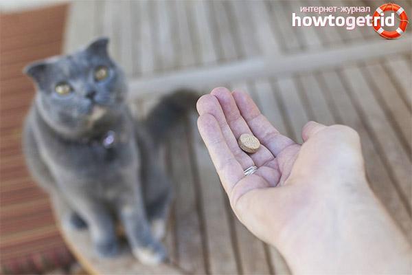 Химические успокоительные кошачьи препараты