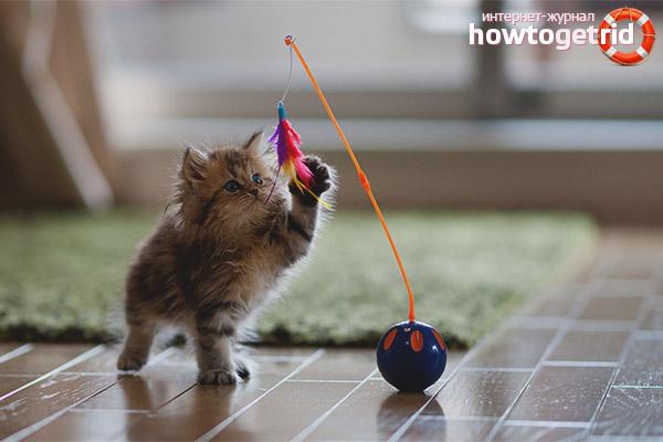 Игрушки для котенка