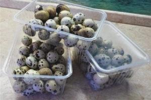 Как хранить перепелиные яйца