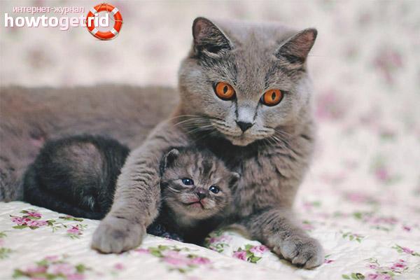 Как познакомить котёнка с котом