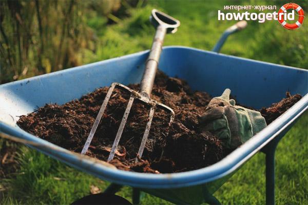 Как удобрять землю под чеснок