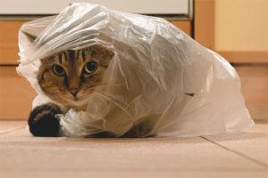 Кот лижет пакеты