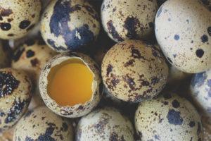 Можно ли есть перепелиные яйца сырыми