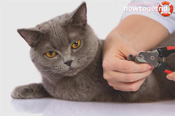 Можно ли стричь когти кошкам