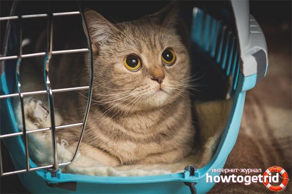 Переноска пластиковый бокс для кошек