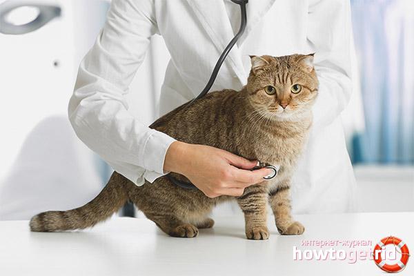 Первая помощь если кошка тяжело дышит