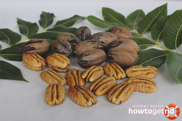 Пищевая ценность ореха пекан
