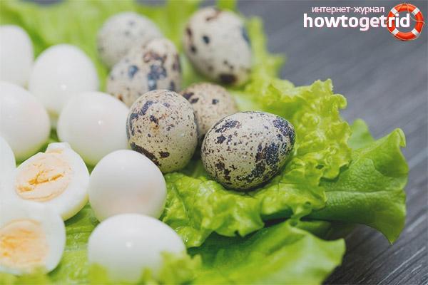 Правила приёма перепелиных яиц