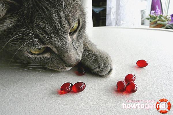 Российские витамины для кошек от выпадения шерсти