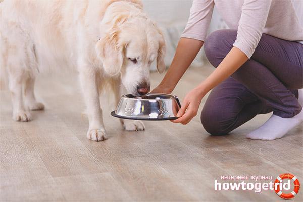 Сколько раз в день кормить собаку