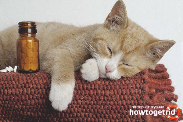 Успокаивающие препараты для кошек со снотворным эффектом
