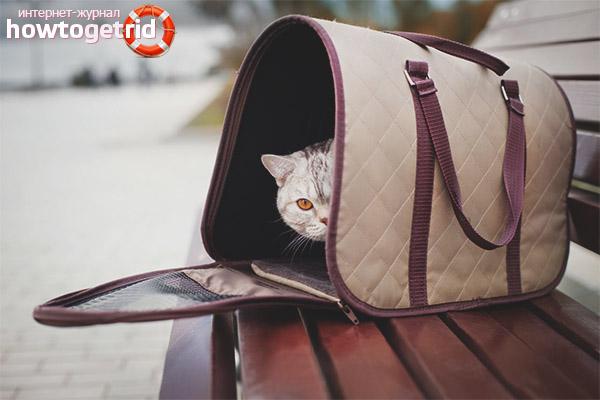 Виды переносных изделий для котов