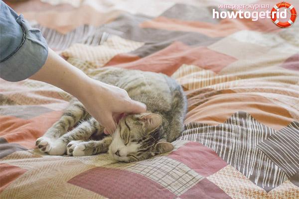 Как отучить кота писать на кровать