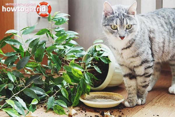 Как защитить растения от кошек