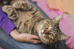 Какие породы кошек самые ласковые и умные