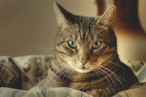 Почему говорят, что у кошек 9 жизней