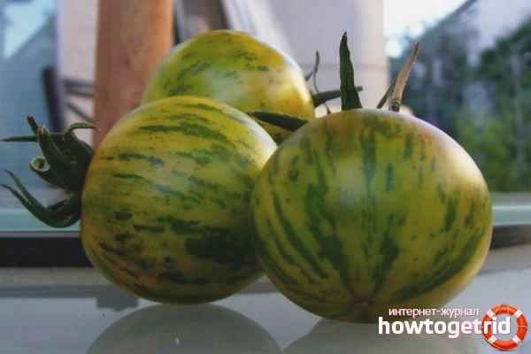 Хранение и транспортировка томатов Зебра зеленая