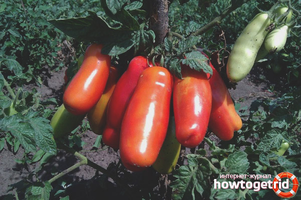 Как ухаживать за томатами Дрова