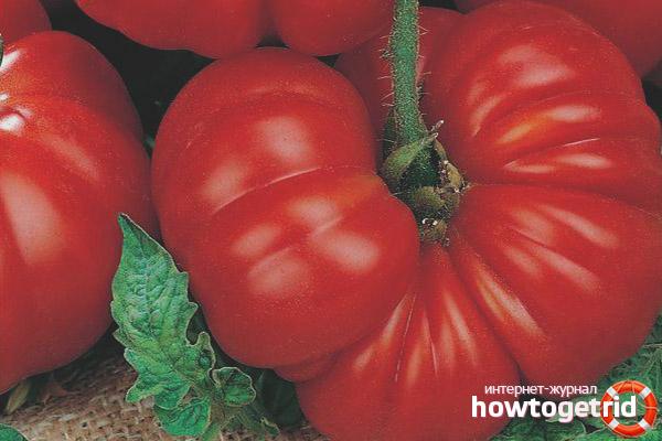 Как ухаживать за томатом Женская доля