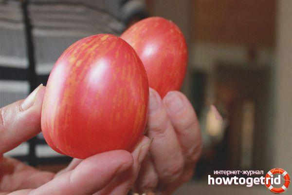 Как выращивать помидоры сорта Дон Жуан