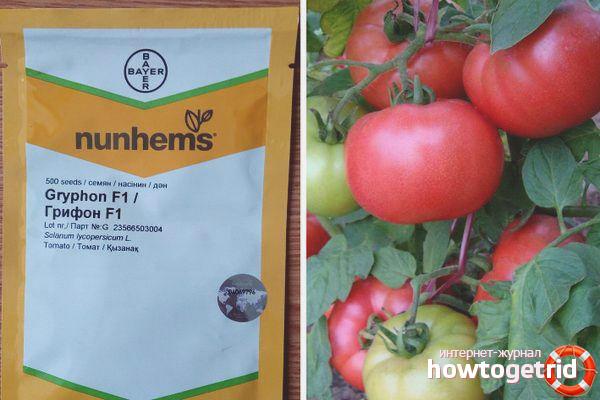 Особенности посадки томатов Грифон