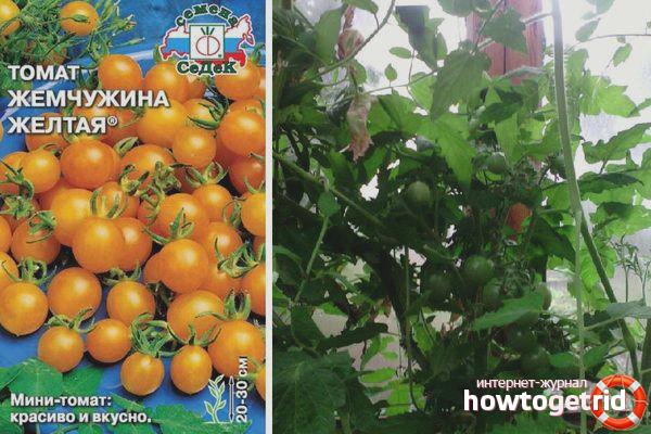 Рекомендации по выращиванию томатов Жемчужина желтая