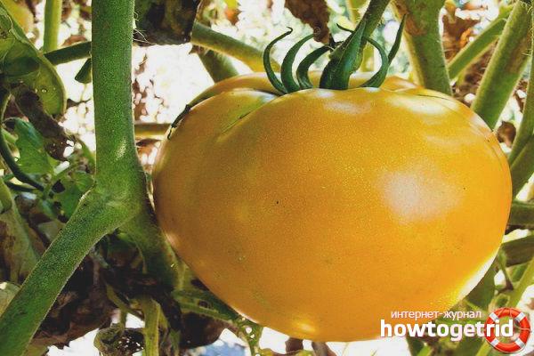 Способы использования томатов Зеро