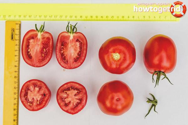 Сроки созревания и плодоношения томатов Великосветский