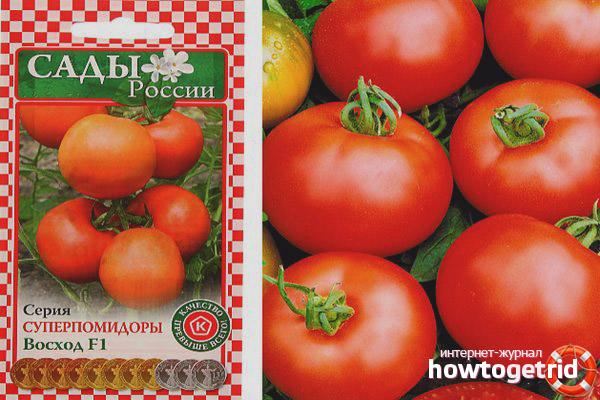Томат Восход: описание и характеристика сорта, урожайность с фото