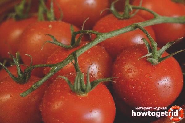 Условия выращивания томатов Кистевой F1